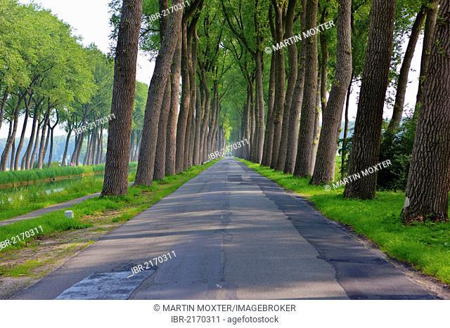 Avenue between Bruges and Damme, Damse Vaart-Zuid, Damme, Bruges, West Flanders, Flemish Region, Belgium, Europe