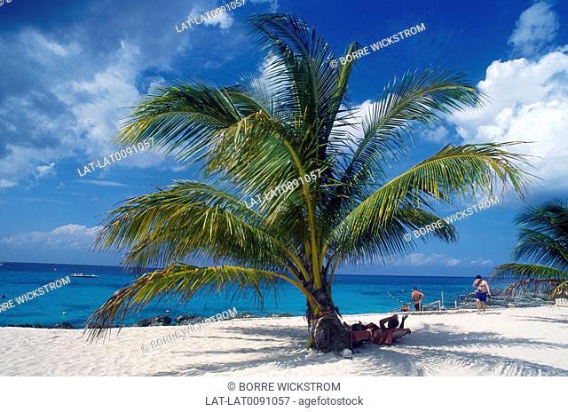 Chankanaab park. Beach. Sand. People. Palm tree
