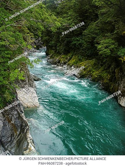 The Makarora River fills with its turquoise glacier waters the famous Blue Pools on the west coast of the South Island. (27 January 2016) | usage worldwide