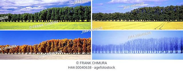 Panoramic Images of Row of Trees in Four Seasons