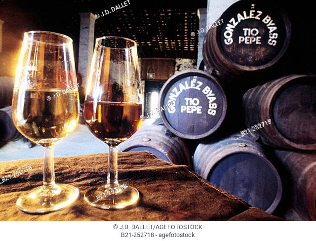 Sherry wineglasses at González Byass winery. Jerez de la Frontera, Cádiz province. Spain