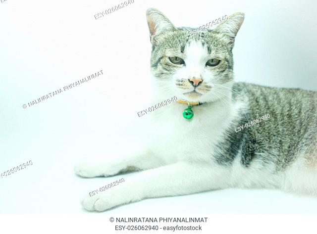 Cute cat portrait wearing a securitiy collar in relaxing time, stock photo