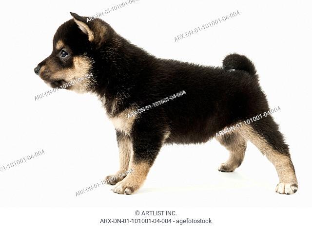 A puppy standing still