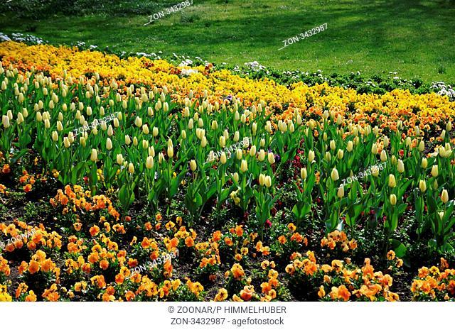 blühende Pflanzen im Beet mit Stiefmütterchen