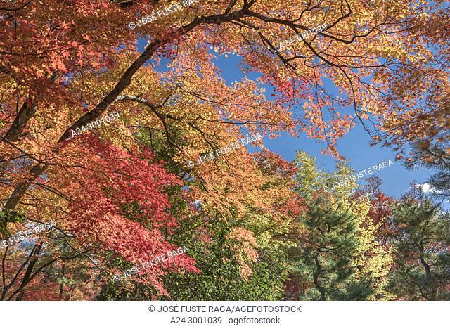 Japan , Kyoto City, Arashi Yama , Autumn Leaves