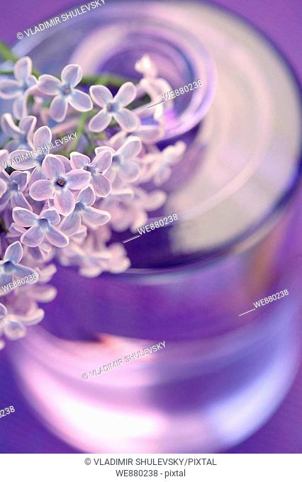 A twig of blooming lilacs in a glass vase (Syringa Vulgaris)