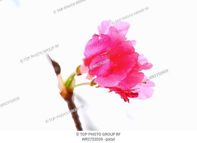 Flower & Leaf