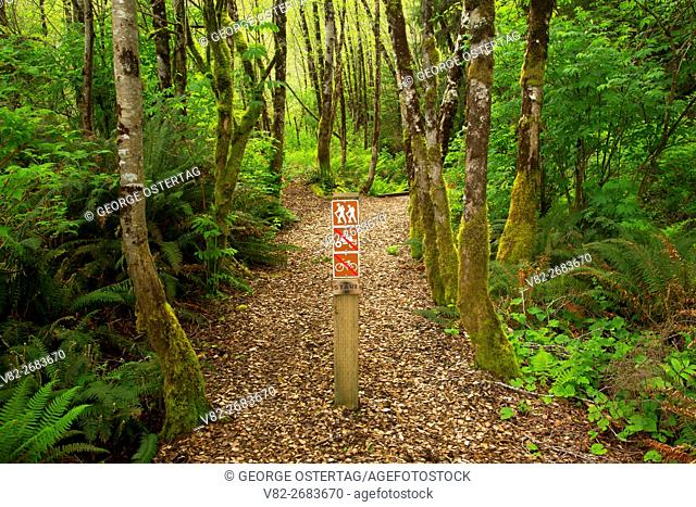 Trail through forest, Woodland Trail, Waldport, Oregon