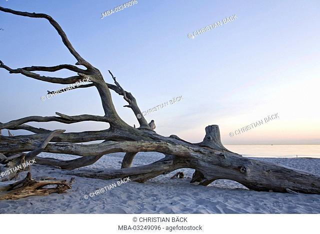 Trunk on the West beach, Baltic sea spa Prerow, peninsula Fischland-Darss-Zingst, Mecklenburg-West Pomerania, Germany