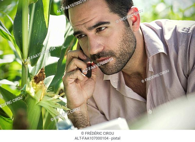 Inspector making phone call while inspecting maize crop in field