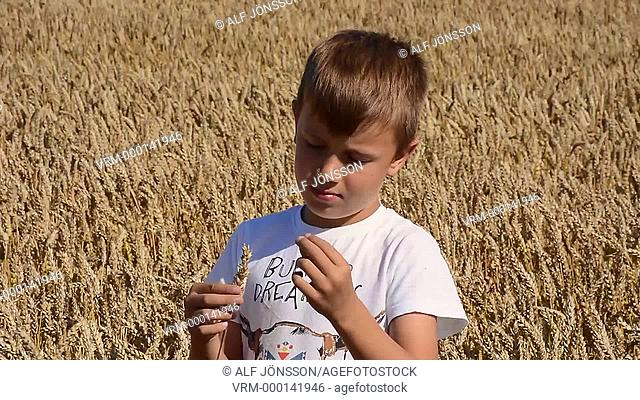 Boy, eight years old, stand in cropfield