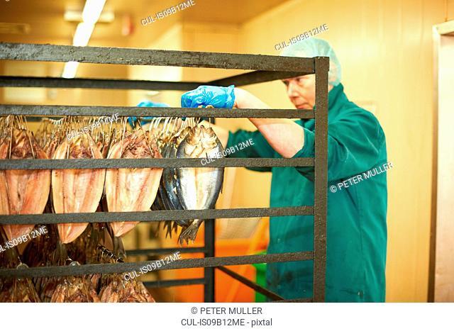 Man in smokehouse hanging fish on shelving rack