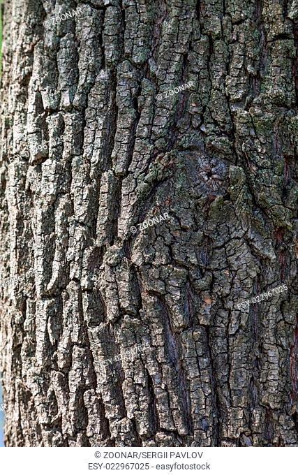 cracked tree bark pattern closeup