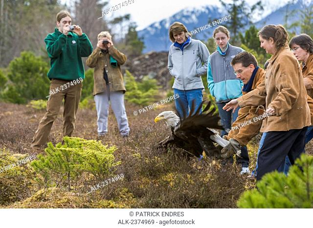 Recovered bald eagle is released back into the wild at the Alaska Raptor Rehabilitation center in Sitka, Southeast Alaska