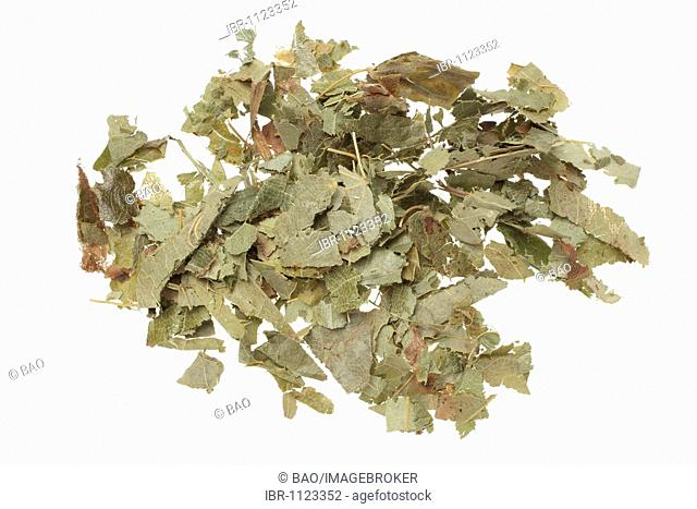 Dried leaves of the medicinal plant Barrenwort, Horny goat weed, lusty goatherb, (Epimedium spp), Yin Yang Huo