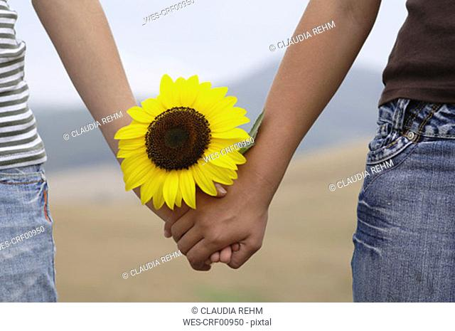 Holding hands with sunflower, close-up