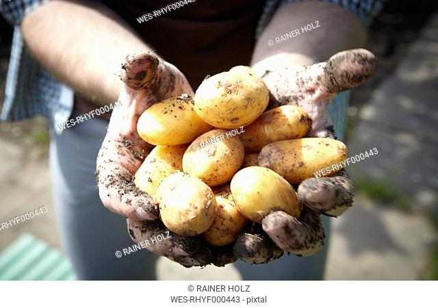 Germany, Cologne, Young man holding potatoes, close up