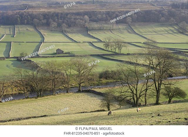 View of river, stone building, drystone walls, bare trees and hillside, River Wharfe, Kettlewell, Wharfedale, Yorkshire Dales N.P