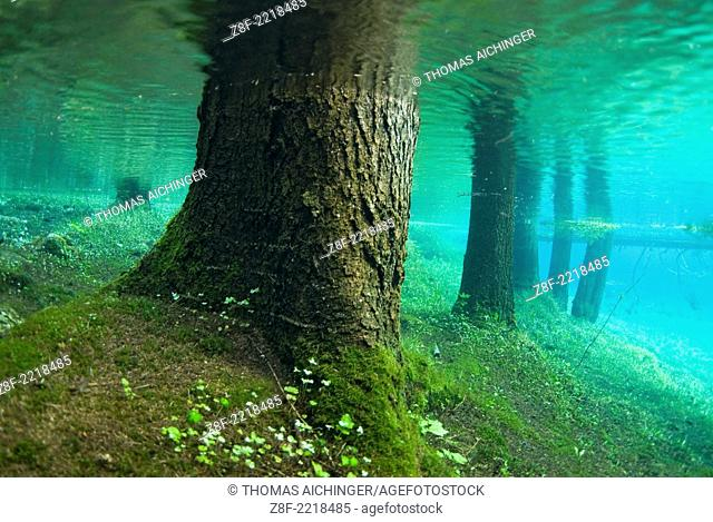 immersed forest in the green lake in Tragöss, Styria, Austria
