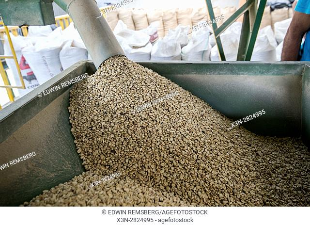 Green unroasted coffee beans are distributed into a large metal bin at a coffee processing facility in Aquires, Costa Rica
