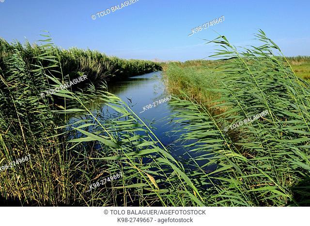 torrente de Muro, Parque natural s'Albufera de Mallorca, términos municipales de Muro y sa Pobla. Majorca, Balearic Islands, Spain