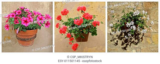 collage with vintage flowerpots with flowering petunia and geran
