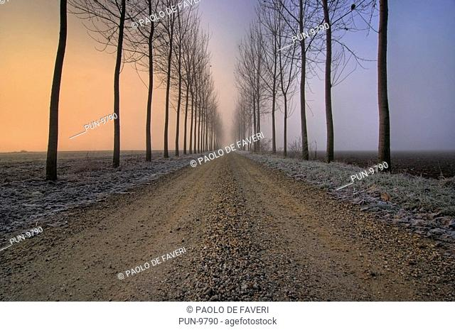 A country road surrounded by a double row of trees in the mist at dawn on a cold morning of December in the country side near Castagnole in Piedmont, Italy