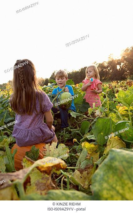 Three young children in pumpkin patch, choosing pumpkins