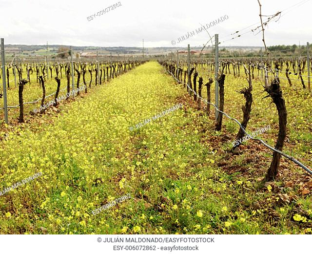 Rural landscape in Almagro, Ciudad Real, Castilla La Mancha, Spain