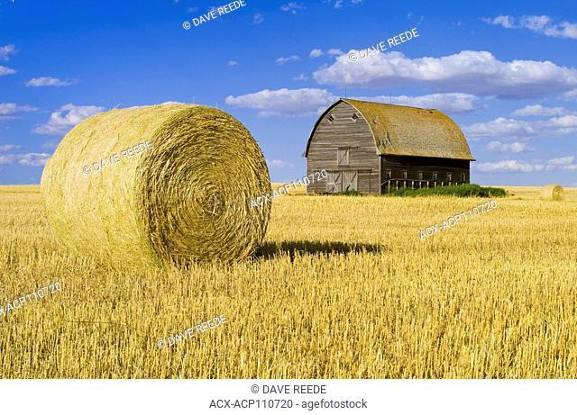 old barn and round durum wheat straw bale near Ponteix, Saskatchewan, Canada
