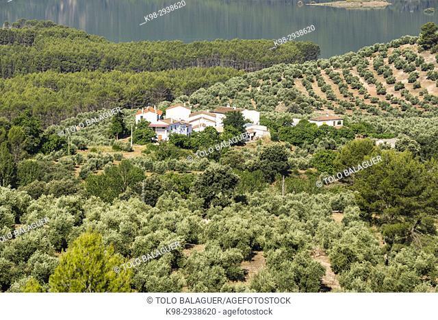Olive grove and Tranco reservoir, Hornos, parque natural sierras de Cazorla, Segura y Las Villas, Jaen, Andalucia, Spain