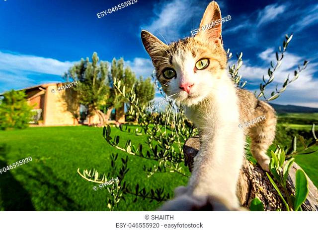 Curious cat in the countryside, Tuscany