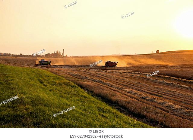 agricultural field, which made the cereal harvest. sunset. Harvesters in the field