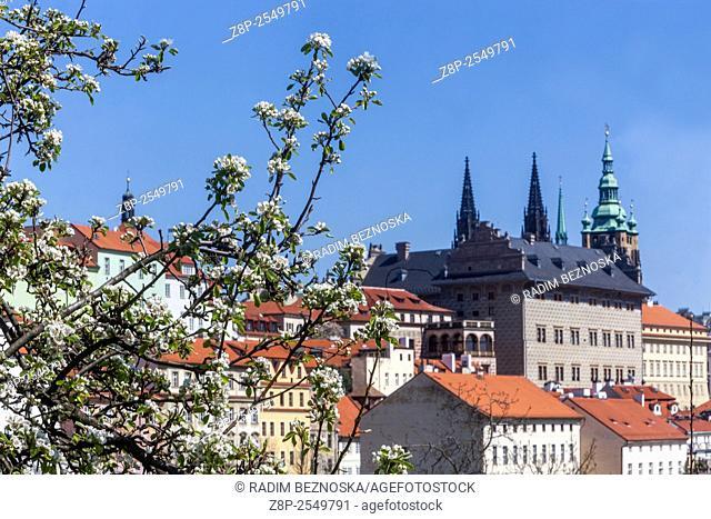 View of Prague Castle from flowering Petrin Hill, Prague, Czech Republic, Europe
