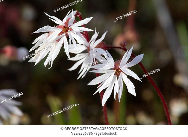 Flowers, Quincy Lakes Unit - Desert Basin Wildlife Area, Washington