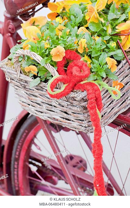 old bicycle, detail, colour Magenta, Flower box