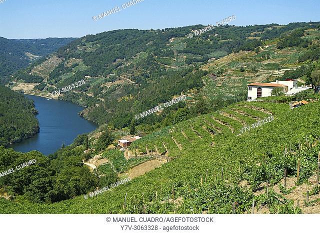 Adegas Moure Winery, D.O. Ribera Sacra, Orense Province, Galicia, Spain