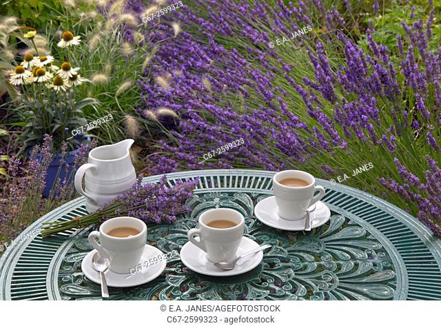 Lavender and morning coffee in garden setting