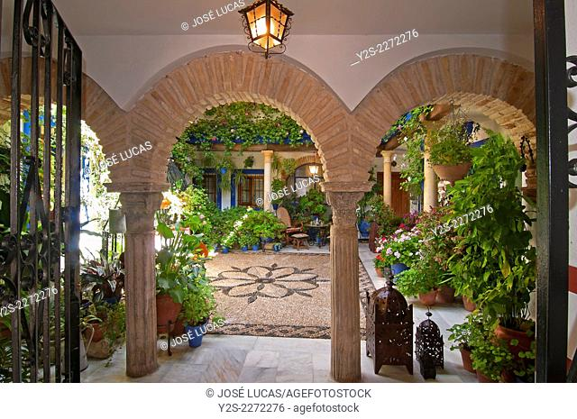 Typical courtyard, Cordoba, Region of Andalusia, Spain, Europe