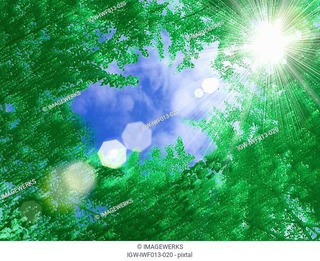 View of sunrays radiating through trees
