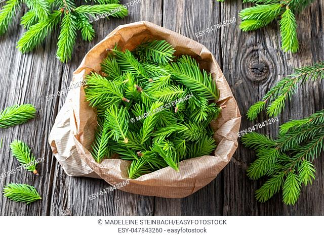 Spruce tips collected in a bag to prepare homemade syrup