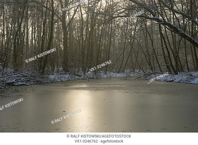 Silted backwater of Old Rhine sling, frozen, surrounded by snow covered deciduous trees, soft backlight mood, winter impression