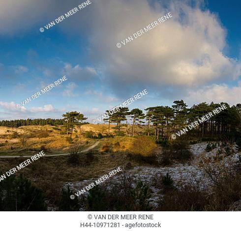Zuid Kennemerland, Netherlands, Holland, Europe, Santpoort, Bloemendaal, Nature, South-Kennemerland, landscape, forest, wood, trees, winter