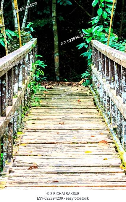 Bridge over the waterfall in Forest