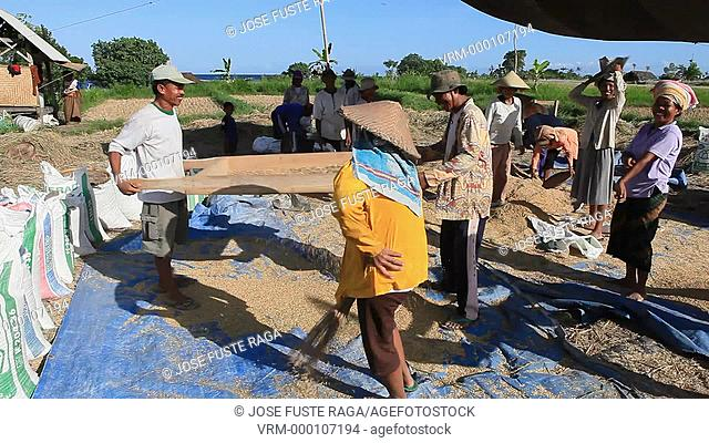 Indonesia, Bali Island,Farmers working ,near Tirta Gangga Water palace