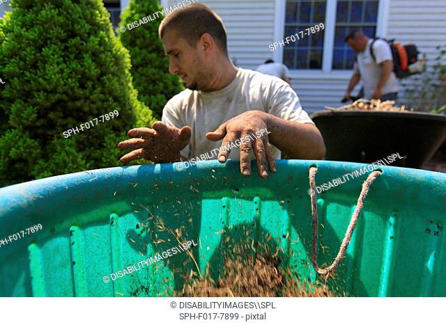 Landscapers clearing weeds into a bin at a home garden and using a blower for cleaning