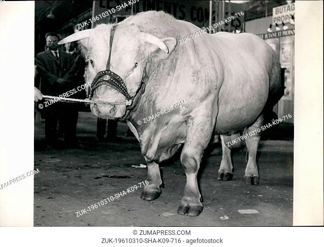 1961 - The heaviest and the choicest. OPS: This bull of Charolais breed with a poetic name of Nonchalant weighs 1.304 kilos
