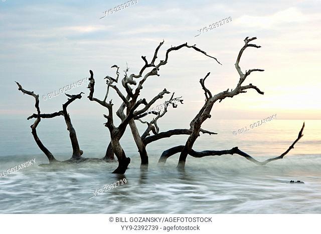 Driftwood Beach - Jekyll Island, Georgia USA