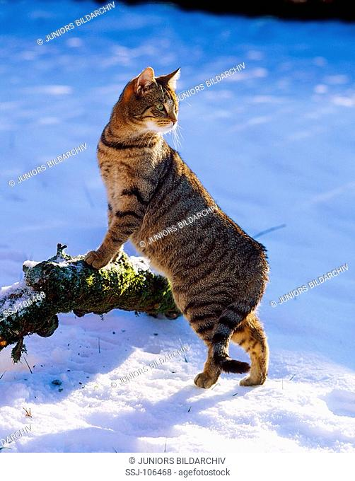 cat at branch in snow