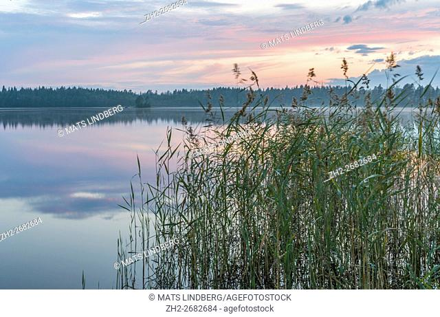 Sunset and the nice colors from the sky is reflecting in the lake and a clump of reed in the foreground, and fog is over the water, Norrbotten, Sweden